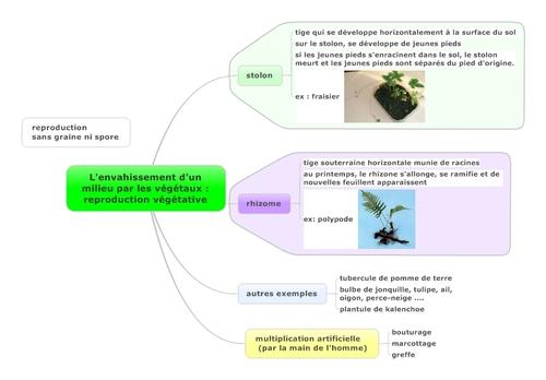 envahissement d'un milieu par les végétaux, reproduction végétative