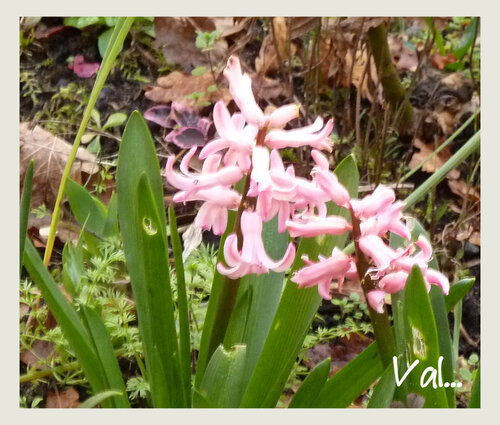 Mon jardin en mars...