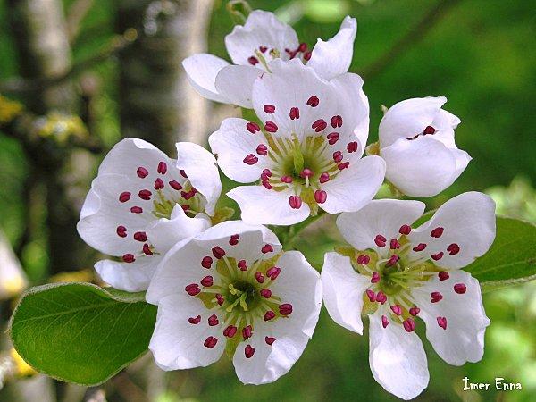 Fleurs-3157.JPG