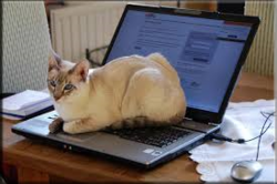 les chats imformaticien