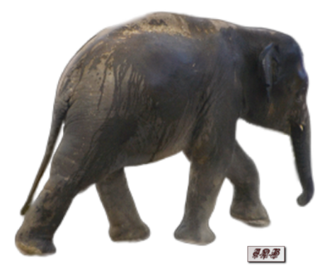 Tubes : Elephant