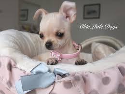 """Résultat de recherche d'images pour """"chiens chics"""""""