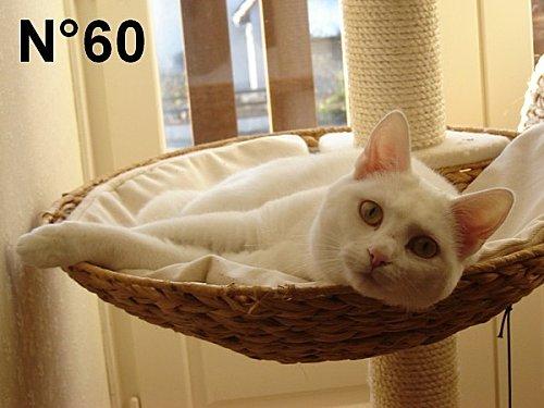 8953-Erilyn-de-annie-2-chats-cuisine-n-60.jpg