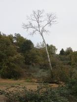 2 novembre 2017 - autour de la Baume Cornillane et de la Pangée