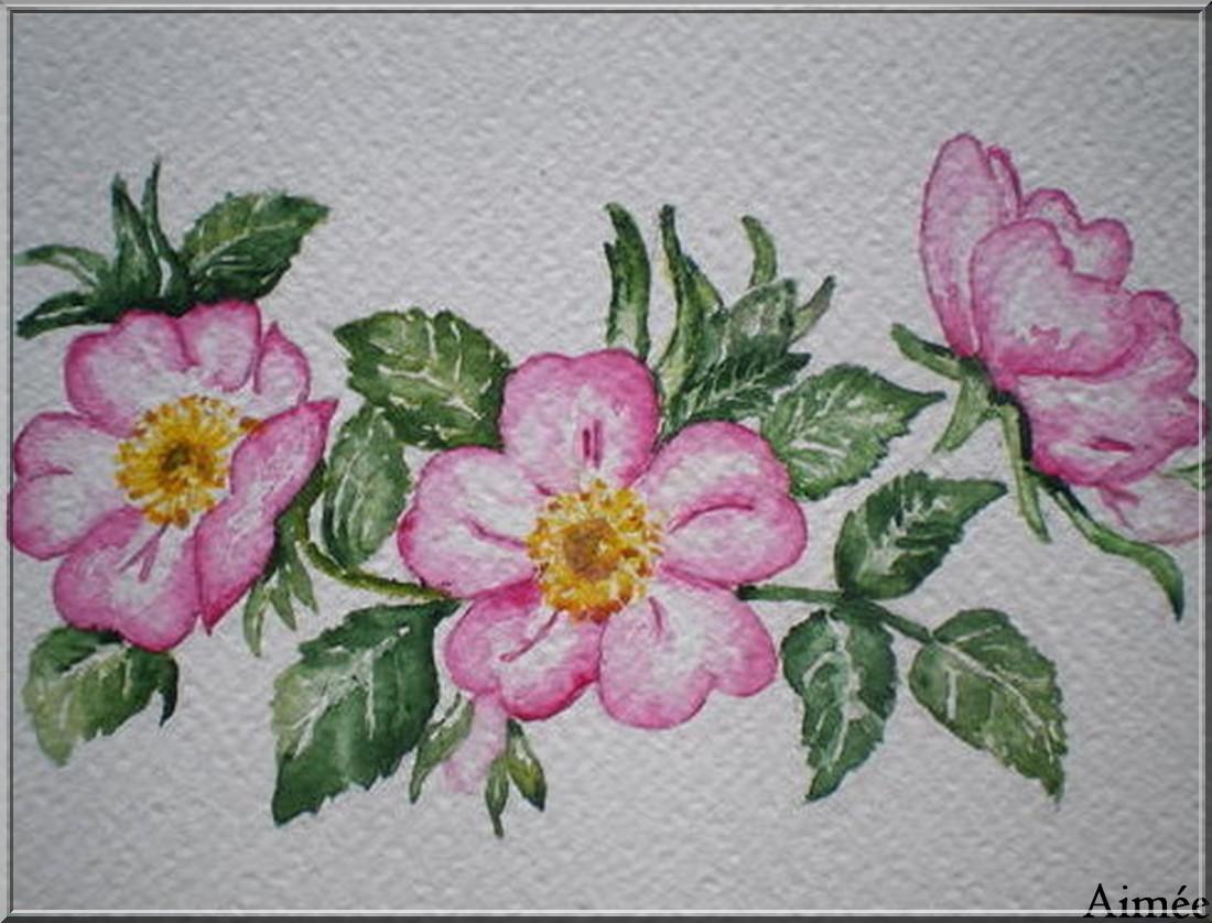 Mes premières aquarelles : 2005/2006/2007