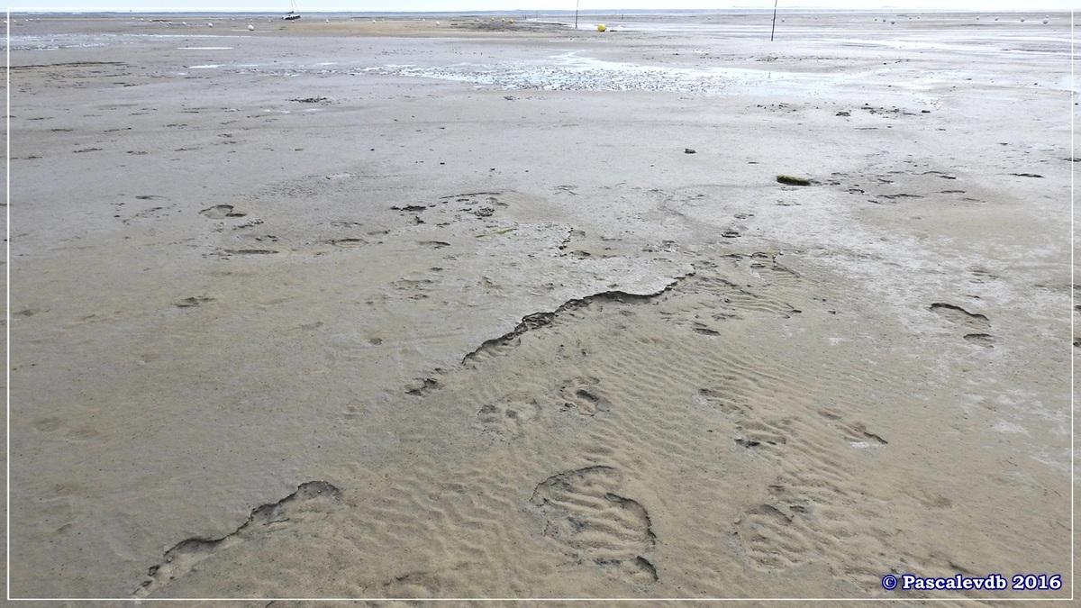 En longeant la plage entre Lanton et Cassy - fin Mars 2016 - 5/8