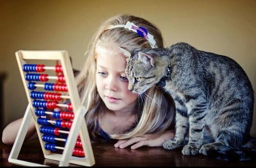 La leçon de calcul du chat :