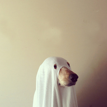 Image de dog, ghost, and Halloween