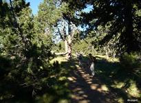 Forêt domaniale des Camporells
