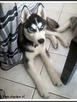 Maô (4 mois)