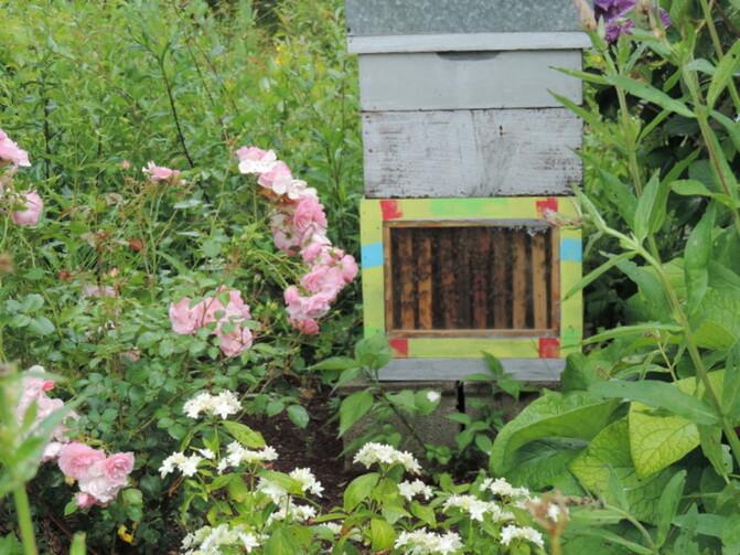 Les Jardins des Renaudies - Mayenne -