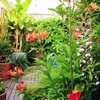 balcon-jardin-urbain