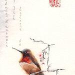 colibri rubis