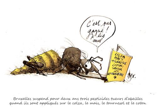 Bruxelles suspend trois pesticides tueur d'abeilles maïs colza coton tournesol