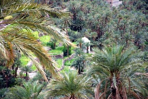 Au dessus de la palmeraie