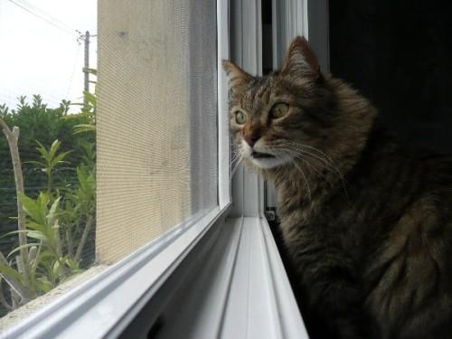 fenetre-moustiquaire-chat-1.JPG