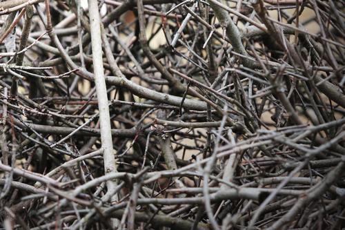 tas de bois qui sèche