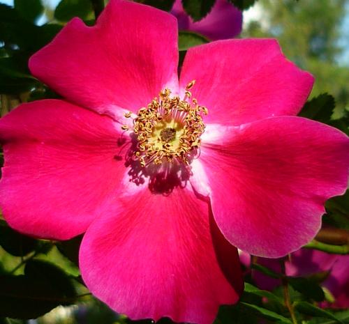 Tube fleur, tube roses