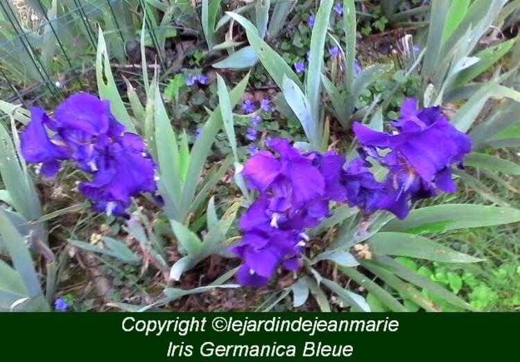 reconnaissance des végétaux,le lilas,L'hélianthème,une jardin japonais,les noms des plantes sont en bas de la photo