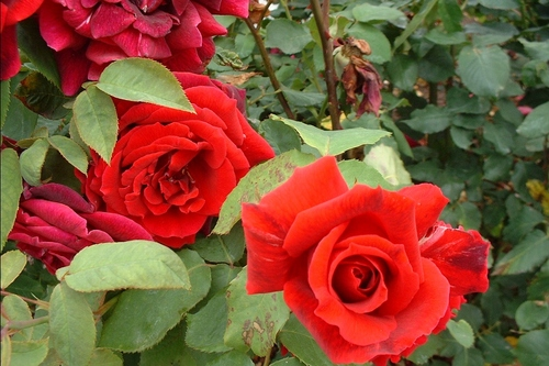 prolonger la vie des bouquets de fleurs en vase