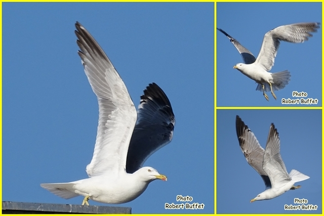 Encore des oiseaux