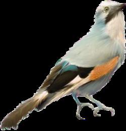 Oiseaux du 16 / 20
