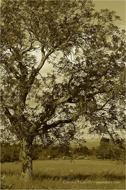 A l'ombre du grand arbre
