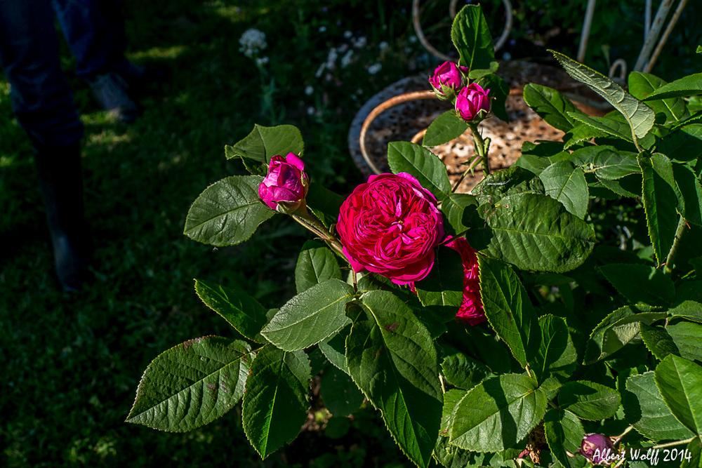 Sur la route des fleurs - Darbonnay - 39