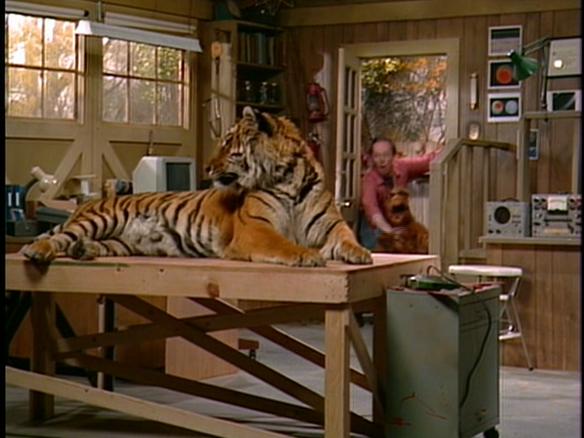Alf et les chats