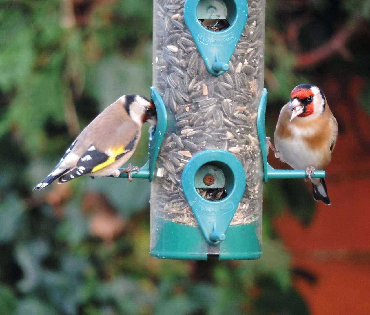 Rest'oiseaux ouvert....