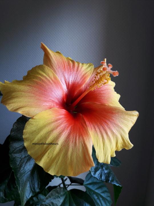 Ma dernière fleur...