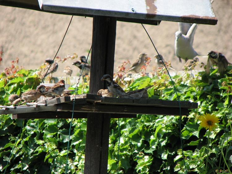 Ingersheim : Vue sur la mangeoire