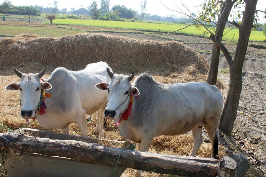 Village tharu - Népal (2)