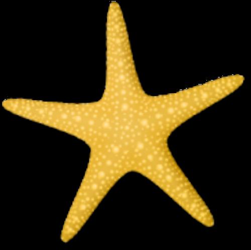 Coquillages / étoiles de mer etc 8