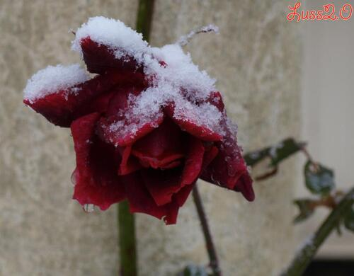 Best of : Snow in garden ;-)