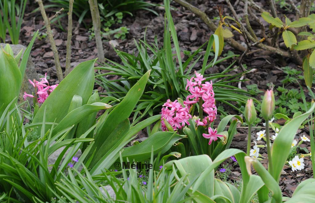 Mon jardin commence à revivre (4)