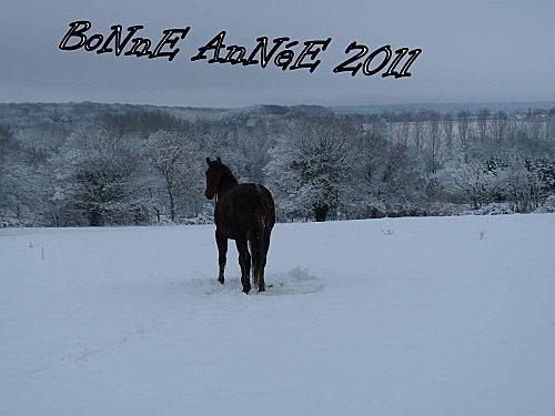 bonne année 2011 poupoute