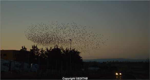 oiseau larzac photo edithb