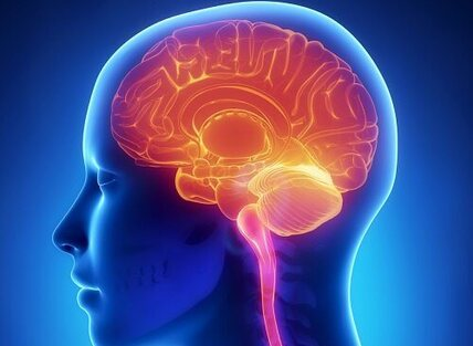 Cerveau-500x366