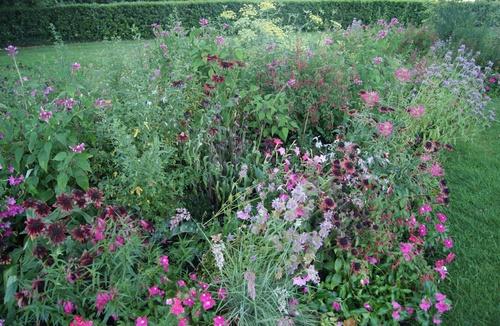 Massifs fleuris de Biscarrosse
