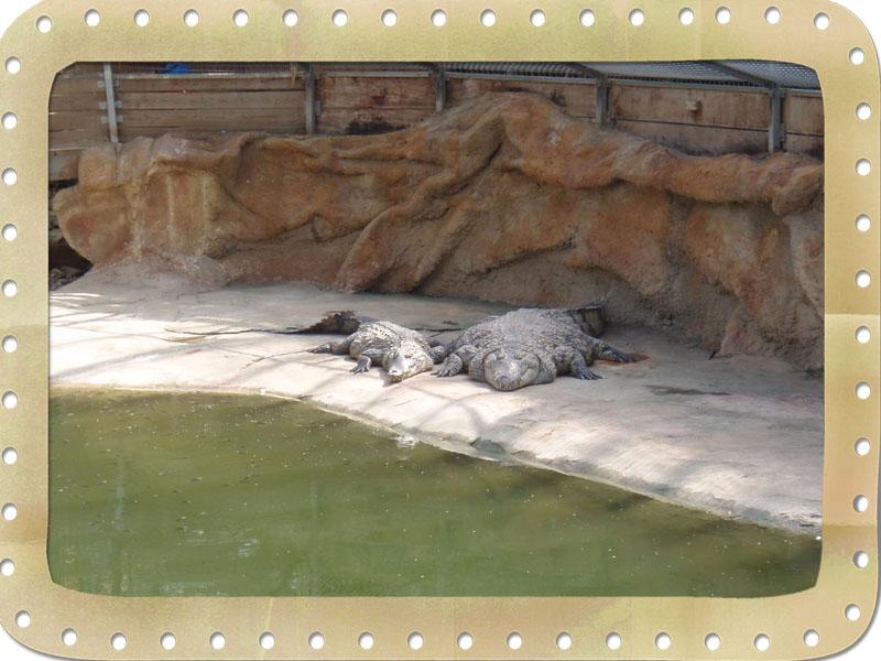 26700 Pierrelatte la ferme aux crocodiles