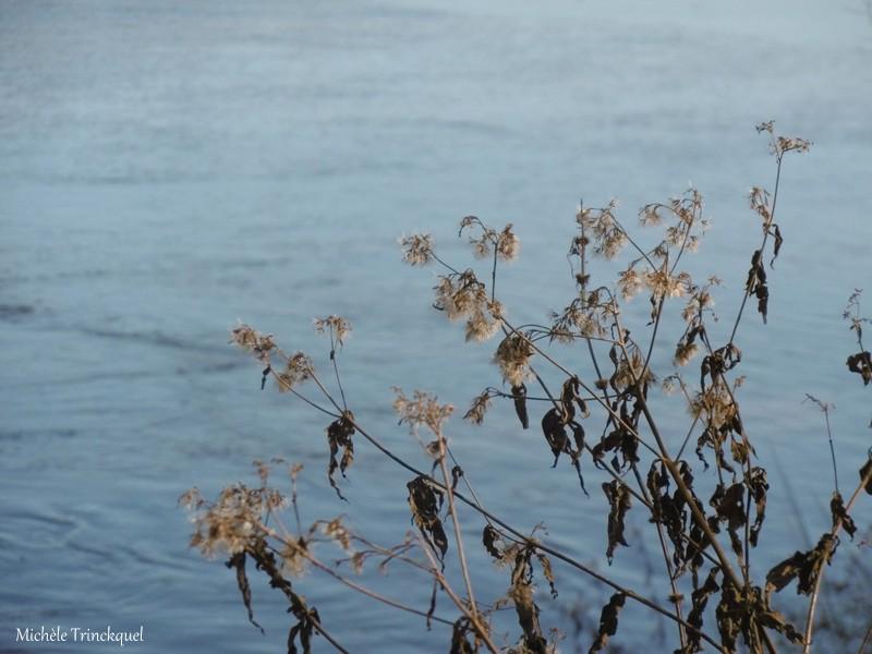 Une balade à l'Etang de la Glacière à ST VINCENT DE PAUL (40), le 10 décembre (suite)...