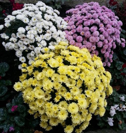Le 21, jours des fleurs chez Greenye