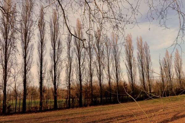 U03---Haie-d-arbres.JPG