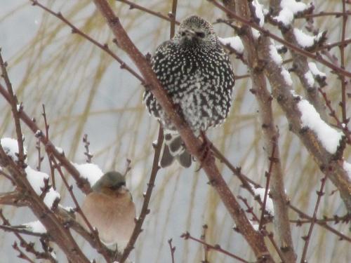 Oiseaux sur branches enneigées et jeu