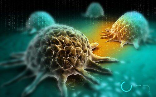 Le-brocoli-diminue-le-risque-de-cancer-500x313