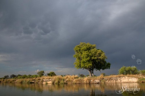 On the Okavango river -Mahango Bwabwata NP buffalo core area