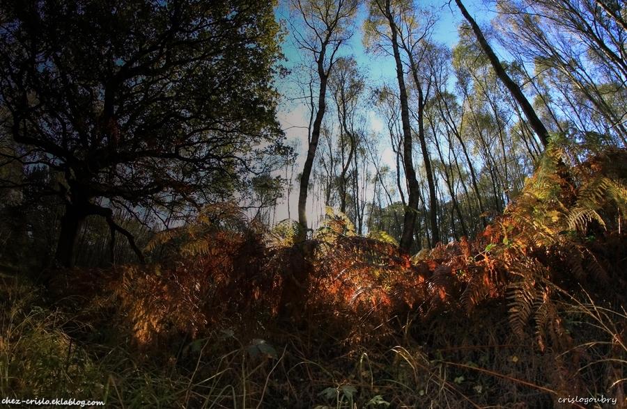 Un peu d'automne