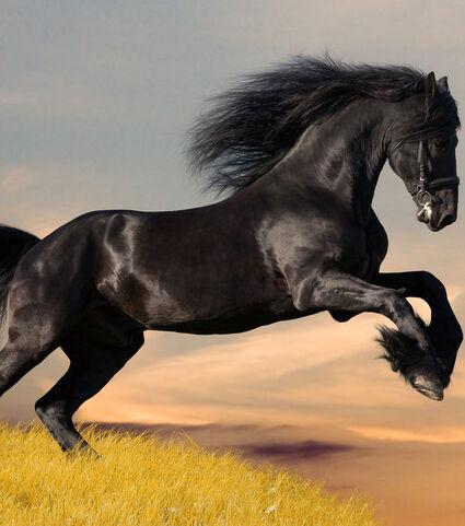 Resultado de imagen de mustang plage cheval foto