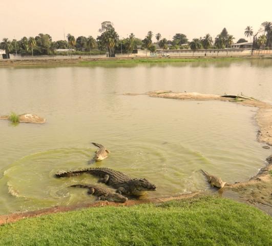 Drame au lac des caïmans de Yamoussoukro